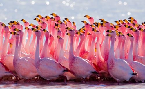 pink-week-end : 130 euros avec le code promo Boursorama